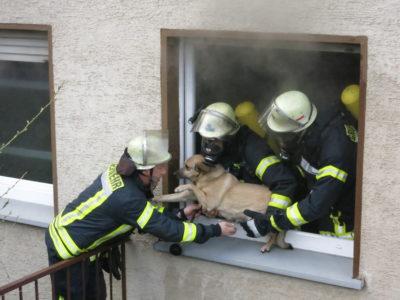 Wohnungsbrand mit Tierrettung